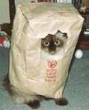 Ever bought the cat in the bag? Then you'll know the element of surprise... PatheticPhotos.com