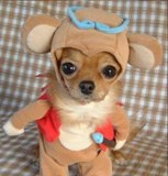 Animal carnival: dress your doggy, a visual carnage... PatheticPhotos.com